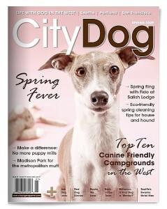 citydog2